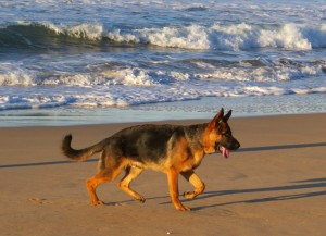 Zander on the beach July 2013